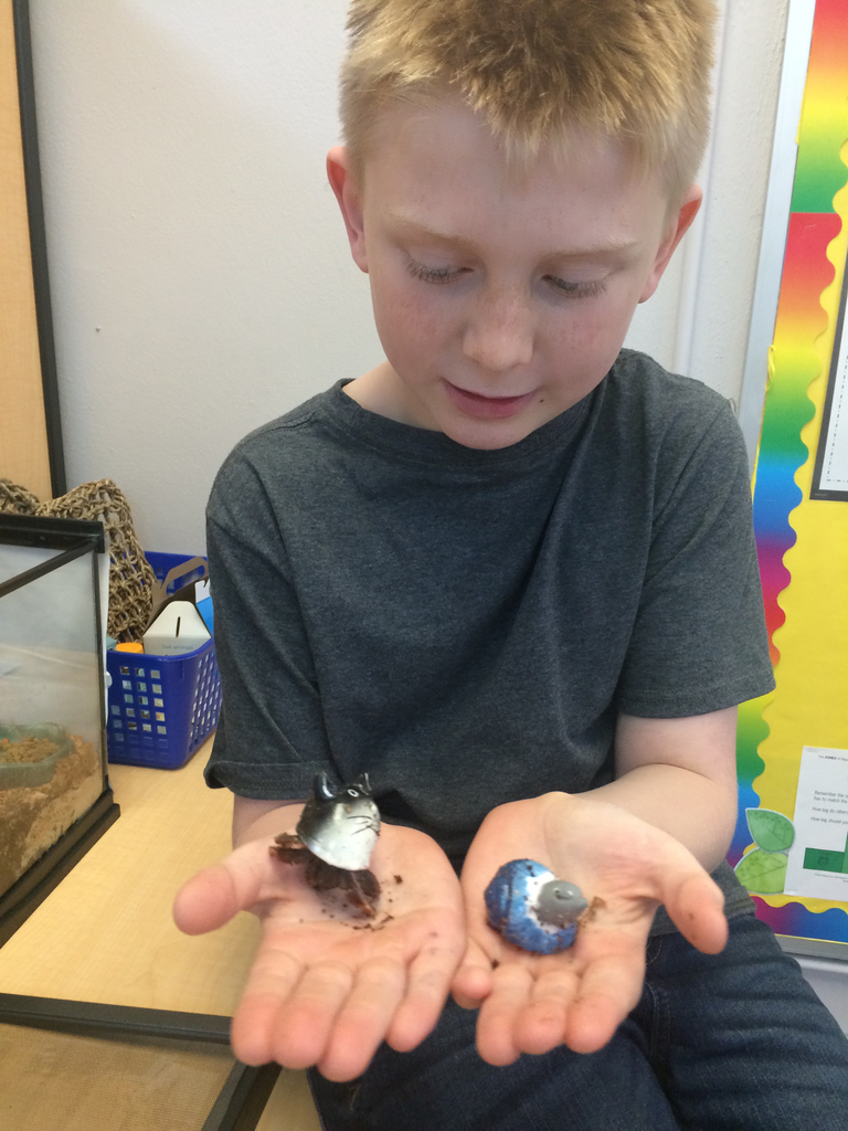 Mrs. M's two hermit crabs