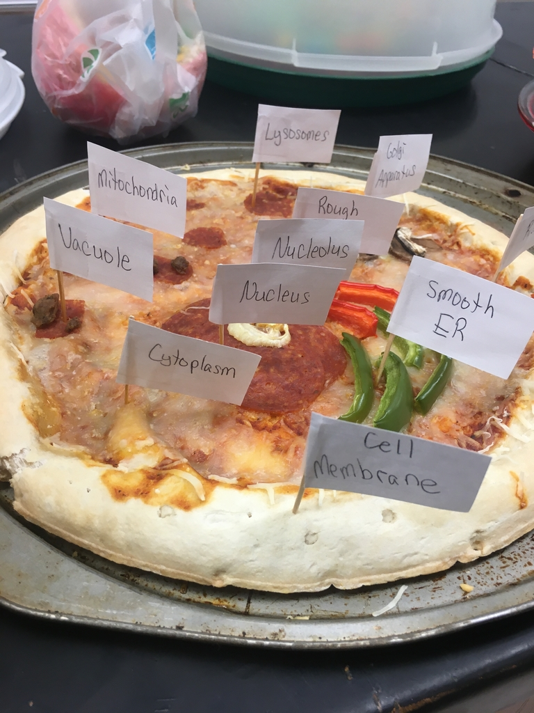 A pizza cell model.